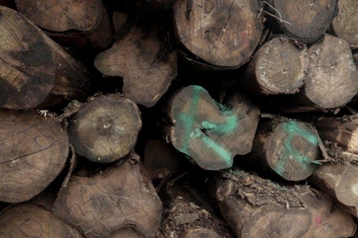 South Sudan Arrests Six Suspected of Illegal Logging