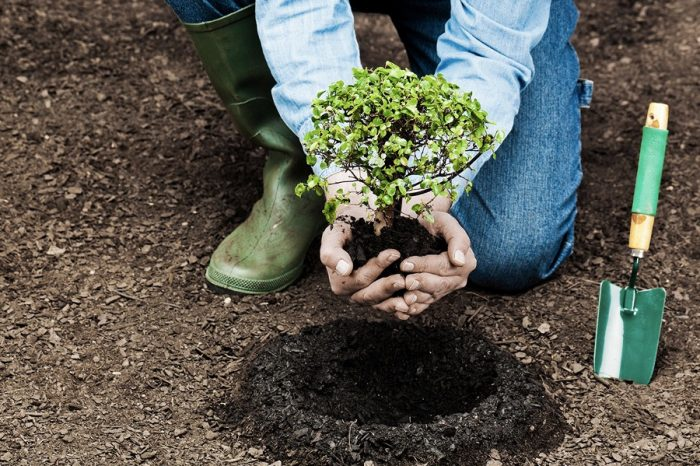 Farmers get trees to improve soil fertility