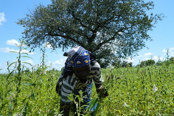 South Sudan small-scale producers receive support from IFAD