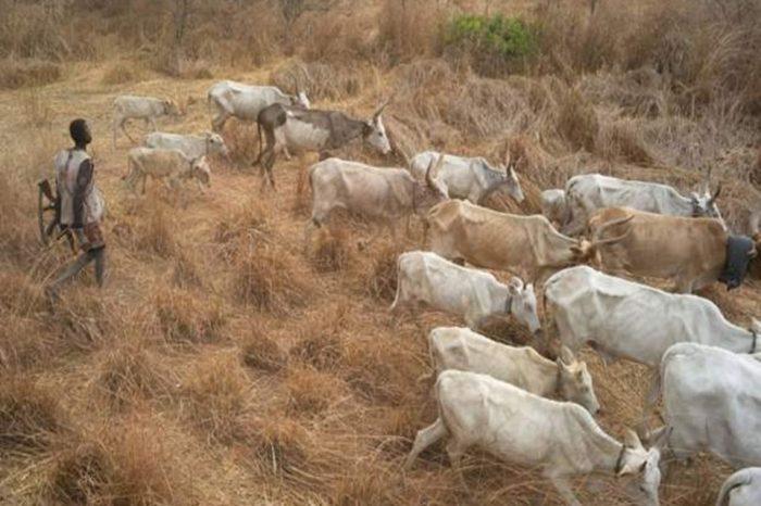 Fourteen killed in South Sudan cattle raid