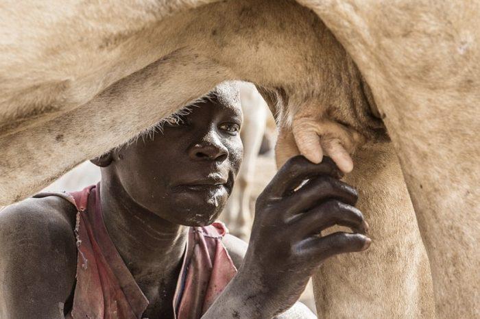 Evolution of Lactase Persistence in Sudan and South Sudan