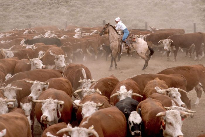 Cattle repatriation: 6 cattle camps set off for their homeland as Central Equatoria government toughens rules
